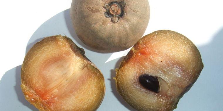 photo image Pre-Columbian people spread fruit species across Latin America