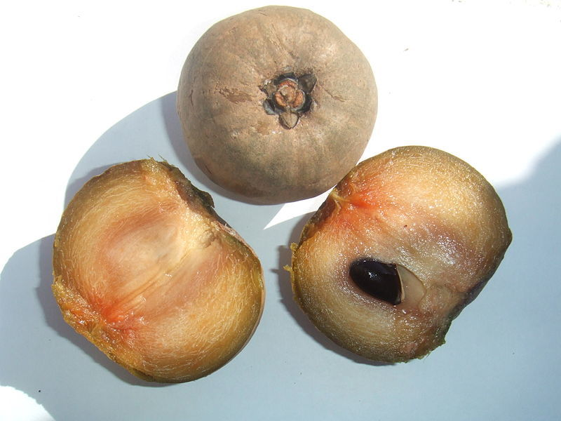 A sapodilla, one of the fruits used by the native inhabitants of Central America.