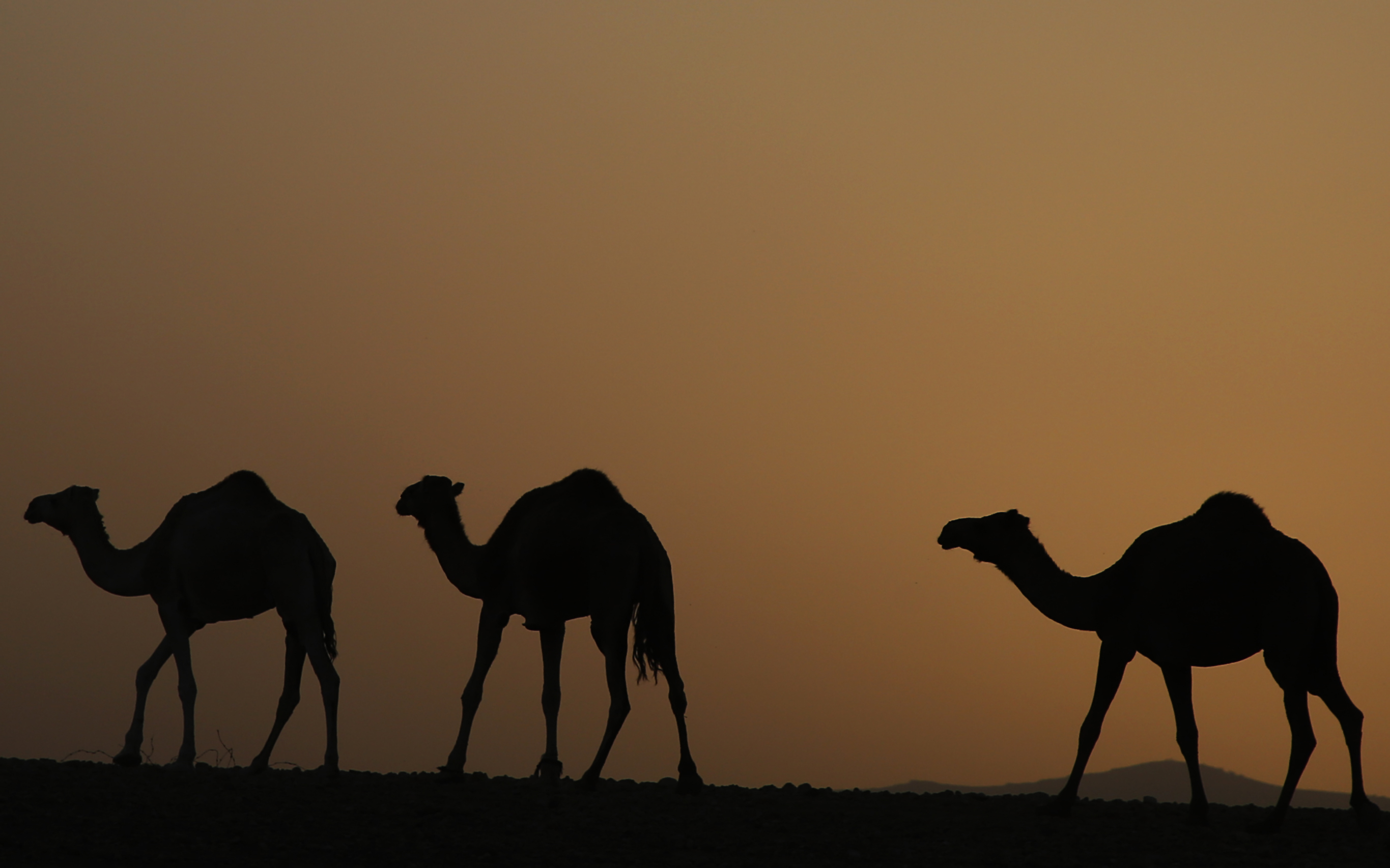 Camels in Africa may have been quietly spreading prion disease for decades