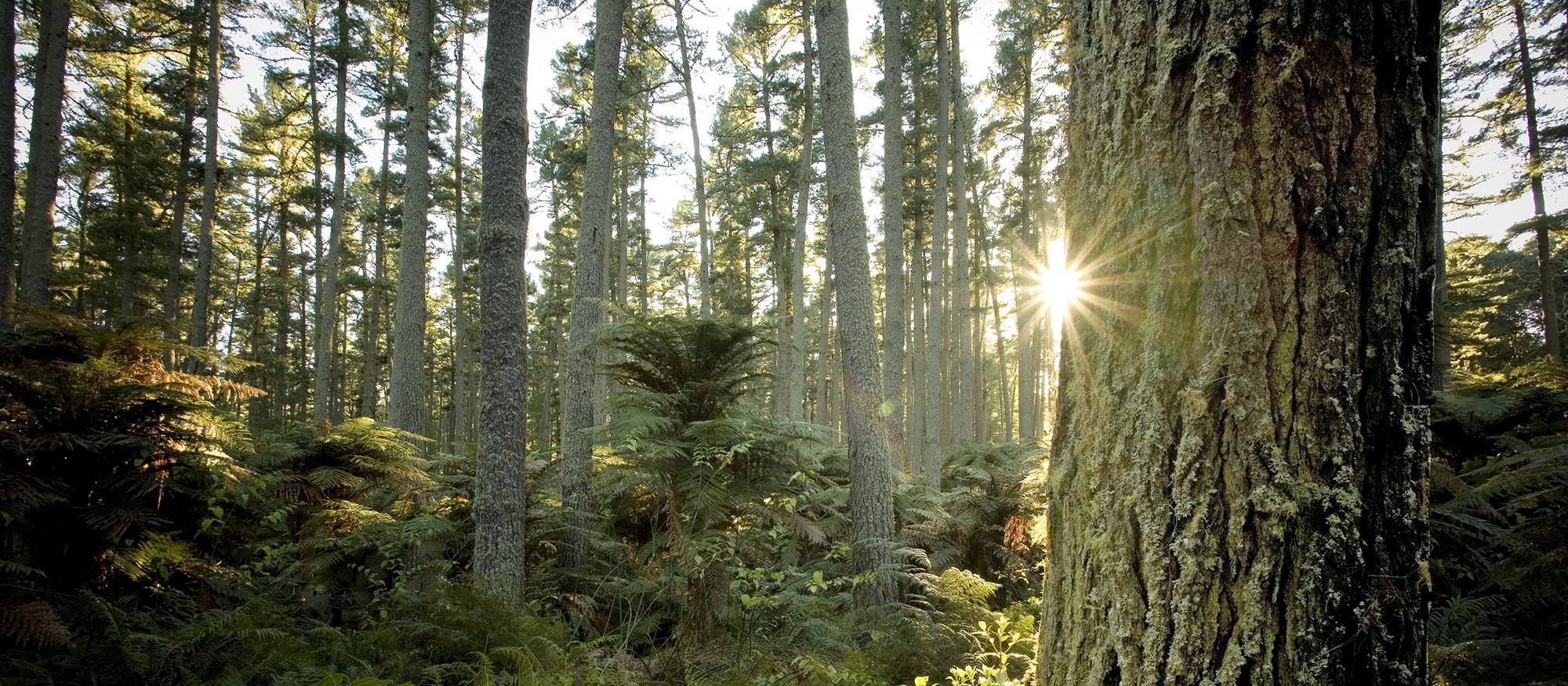 Fine New Zealand timber.