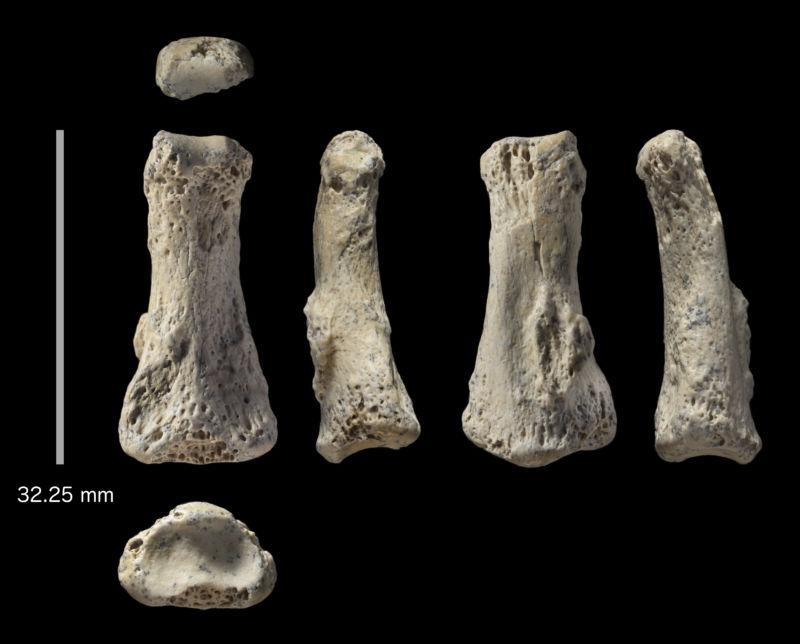palaeodeserts project, human bone, phalanx.