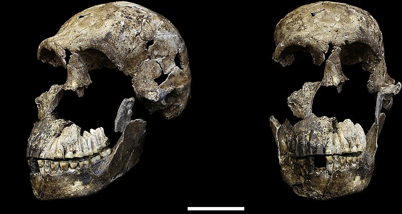 Skull fragments from one of our proto-human ancestors.
