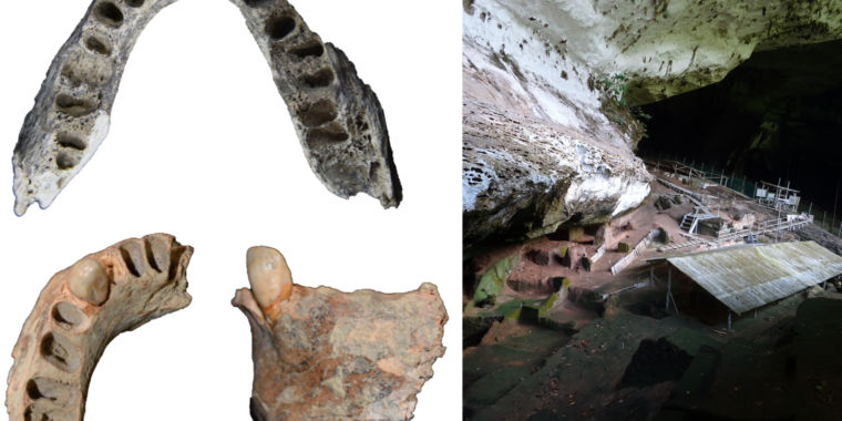30,000-year-old jawbone records tough diet in Pleistocene Southeast Asia