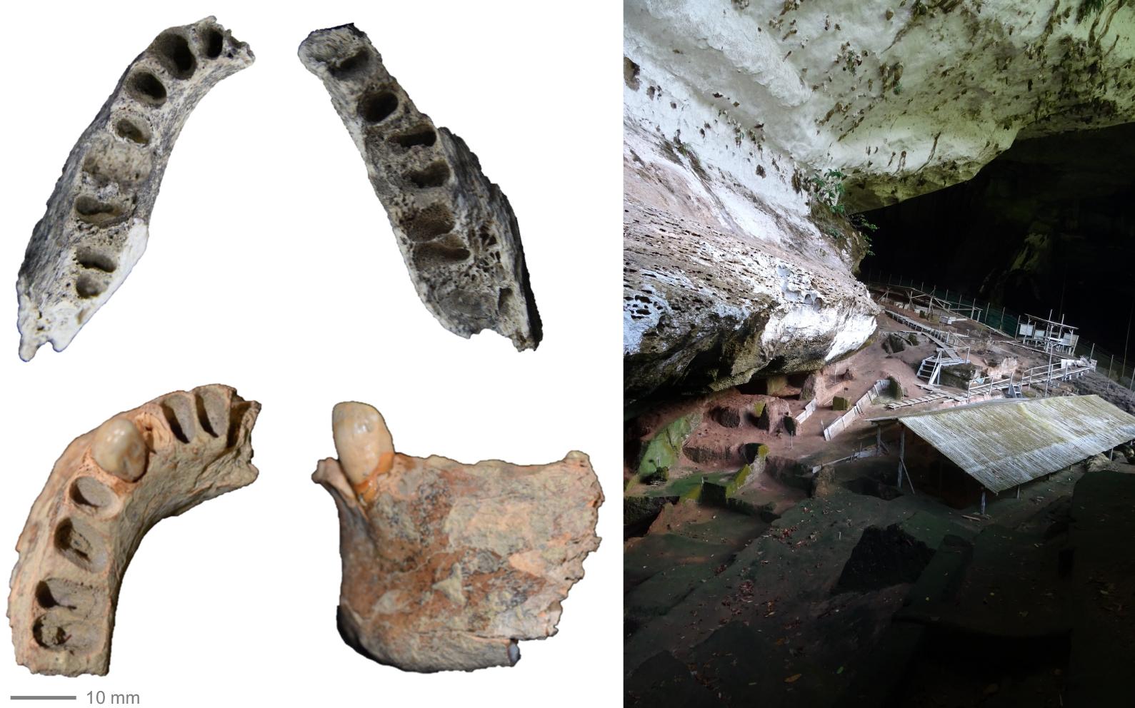 30,000-year-old jawbone records tough diet in Pleistocene Southeast ...