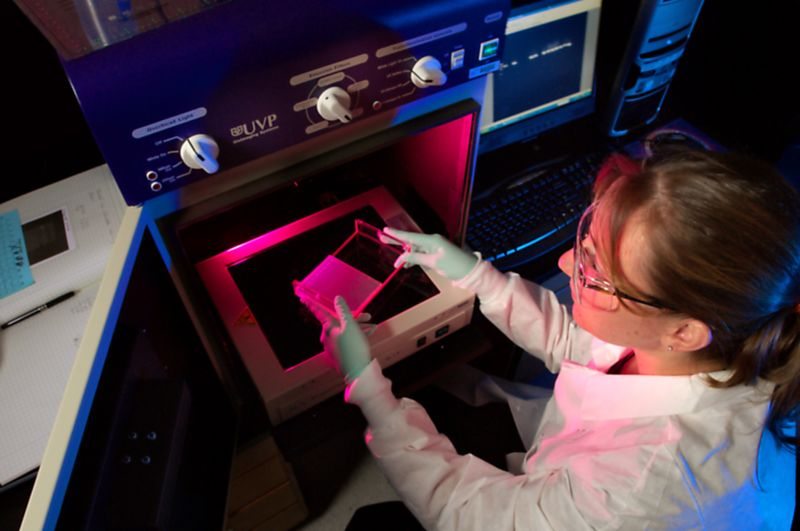 High-angle photograph of a woman scientist holding an electrophoresis plate for DNA separation over the UVP imaging System.