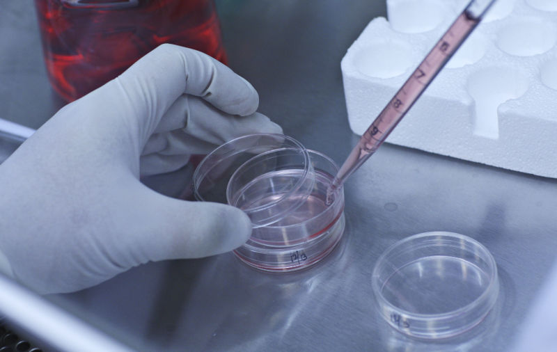 A close-up of a scientist pipetting cells into small dishes in a lab.
