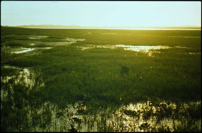 Extreme long shot of marshland
