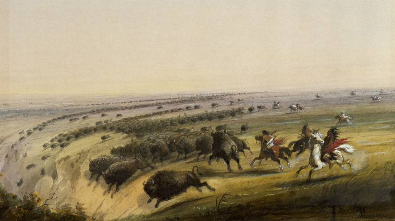 Native Americans managed the prairie for better bison hunts