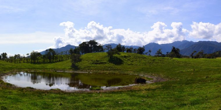 Supposedly Pristine South American Forest Had been Pre-Columbian Farmland