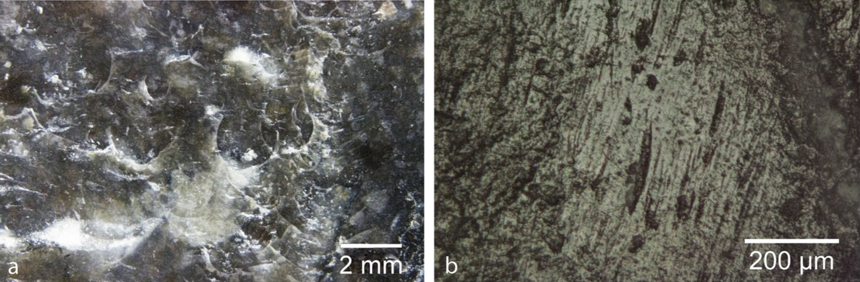 On the left, C-shaped marks from directional percussion are visible with the naked eye. On the right, striations produced by friction show up under a microscope.