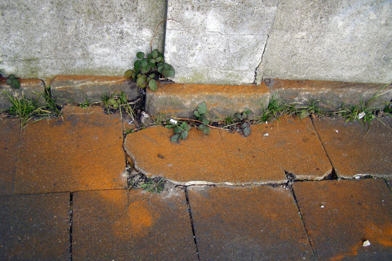 Image of weeds growing through cracks in paving bricks