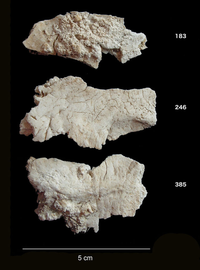 Fragments of cremated occipital bones from Stonehenge.
