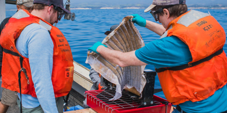 New Sponge for Cleaning Harbor Oil Leaks has a Successful Real World Test