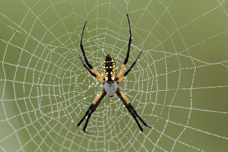 Image of a spider on its web.