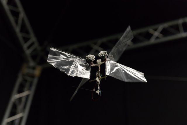 The DelFly Nimble robot in stationary (hovering) flight.