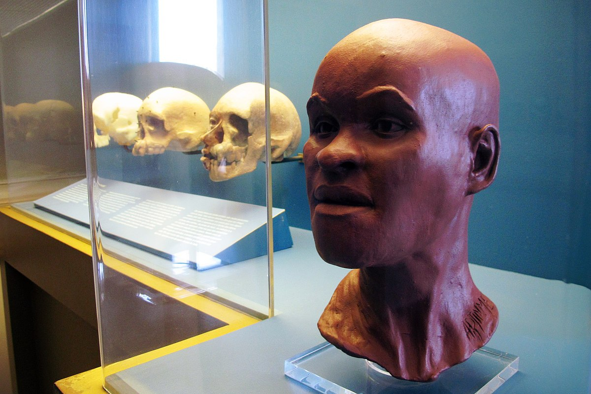This facial reconstruction, along with several casts of Luzia's skull, were among the items lost in the fire that destroyed the National Museum of Brazil in September.