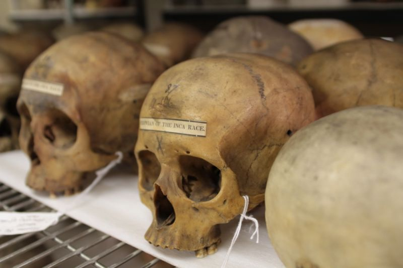 The Morton skull collection at the University of Pennsylvania.