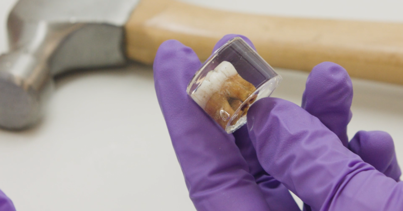 Hexbyte - Tech News - Ars Technica | Neanderthal teeth reveal lead exposure and difficult winters