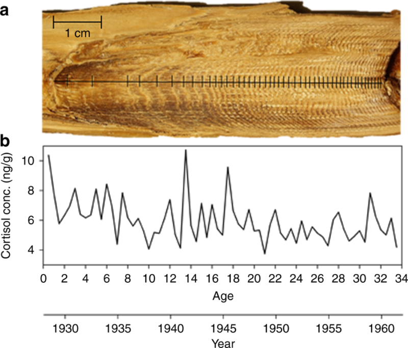 A graph next to what looks like a tree sliced down the middle but is actually whale earwax.