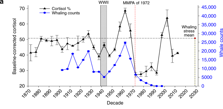 Whale cortisol levels (black) track whaling levels (blue) closely throughout the 20th century. Between 1939 and 1945, despite whaling levels dropping, a cortisol spike could be explained by other war-related stresses for whales.
