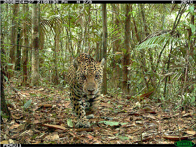 A camera trap working properly.