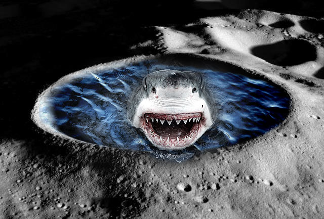 Hopefully the moonshark (and its ocean-ly ilk) can be saved from this pollution scourge.