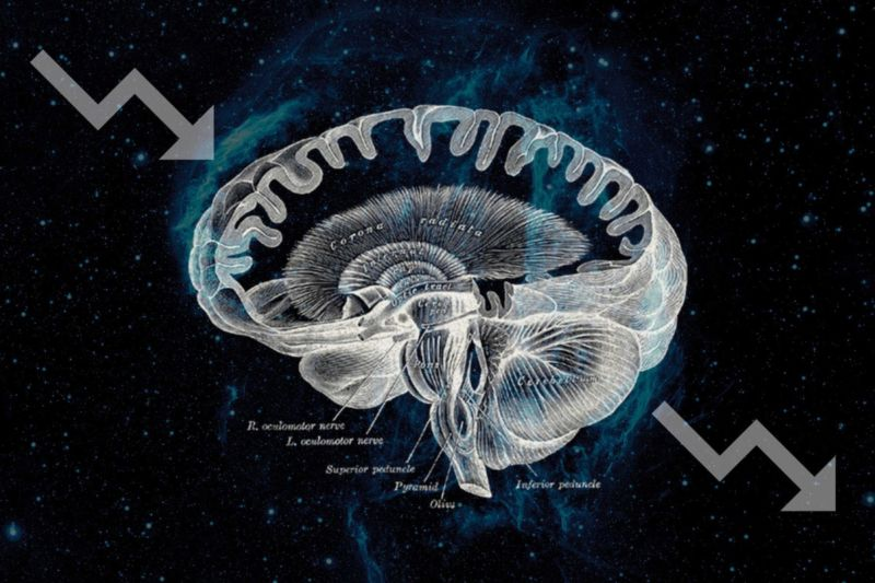 High-contrast diagram of human brain