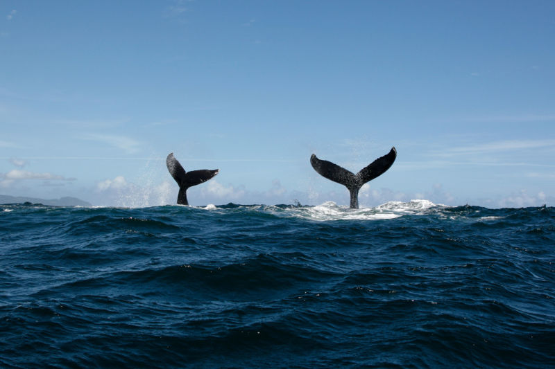 Image of two whale tails.