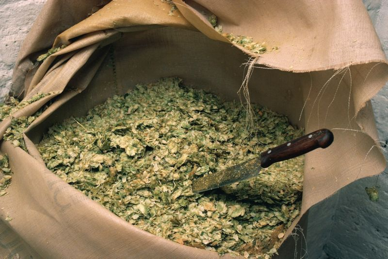 Regional differences in the aromatic compounds found in hop varieties can significantly affect the taste of craft beers.