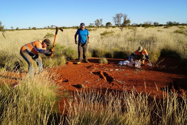 Excavations in a fairy circle in northwestern Australia by three co-authors of two new studies seeking to explain their formation: (l to r) Todd Erickson, Hezi Yizhaq, and Miriam Muñoz-Rojas.