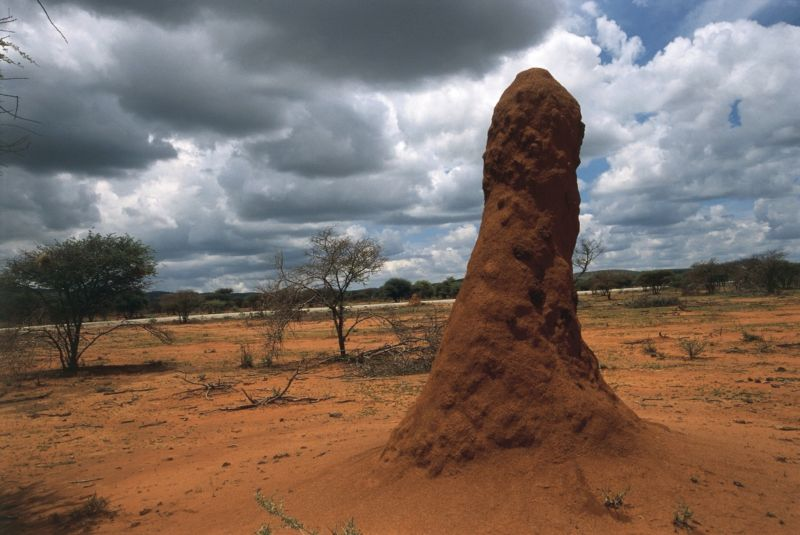 Nature's skyscrapers: X-ray imaging reveals the secrets of termite mounds