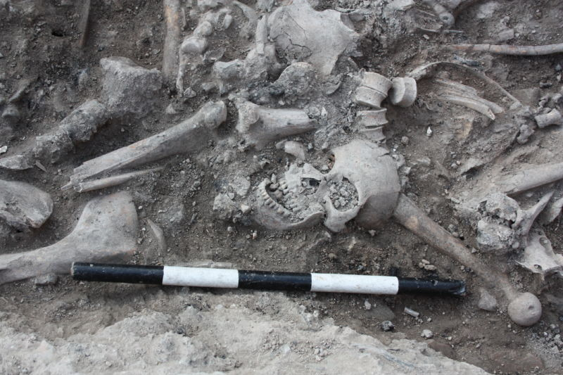 DNA from medieval Crusader skeletons suggests surprising diversity