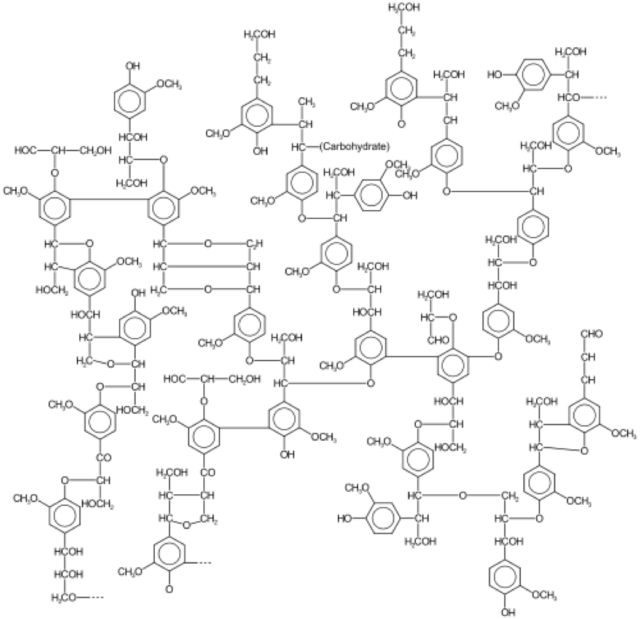 The complicated structure of lignin.