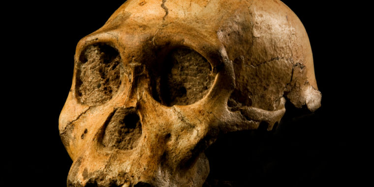 Probability Helps Narrow Down the Search for Human Ancestors