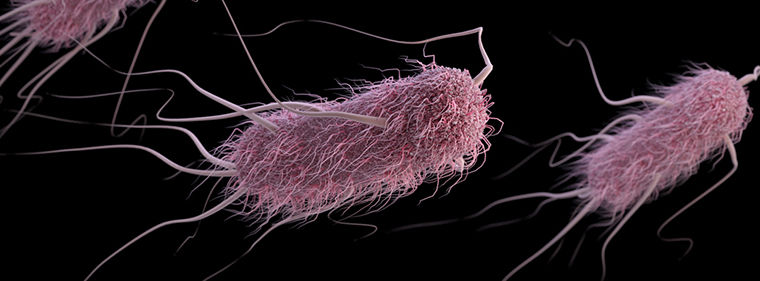photo of Researchers make their own E. coli genome, compress its genetic code image