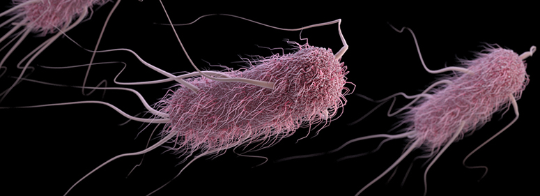 Like any other E. coli, but different.