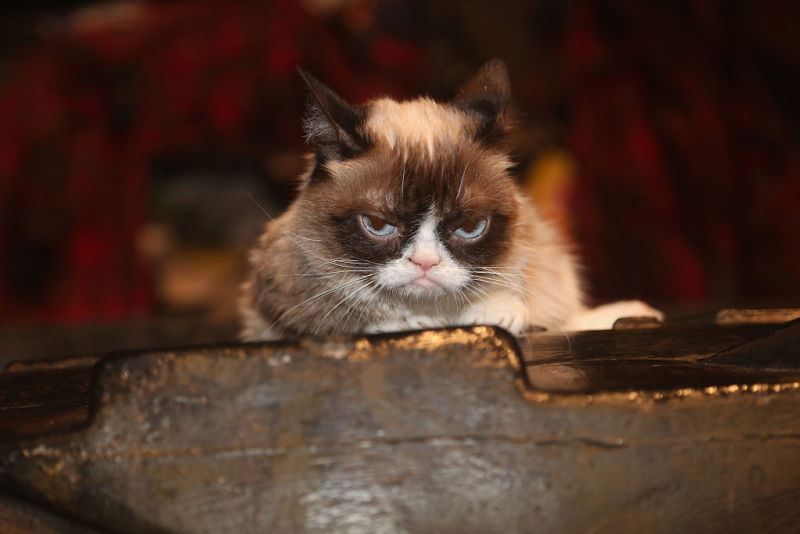 "Grumpy Cat poses on the set as she makes her broadway debut in ""Cats"" on Broadway at The Neil Simon Theatre on September 30, 2016 in New York City."