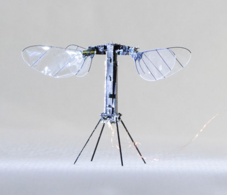 Image of a four winged robot.
