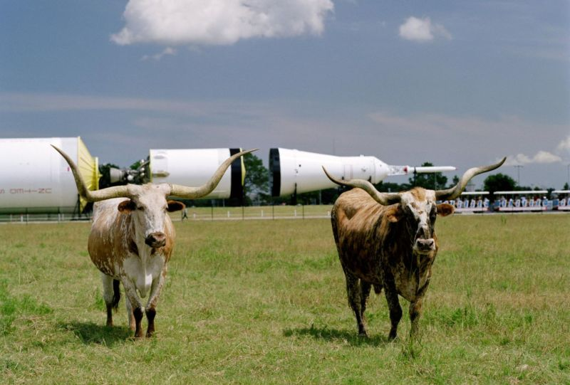 Since Apollo, NASA's human spaceflight plans for deep space have been all hat and no cattle. Unlike this photo of two cattle in Johnson Space Center's Rocket Park.