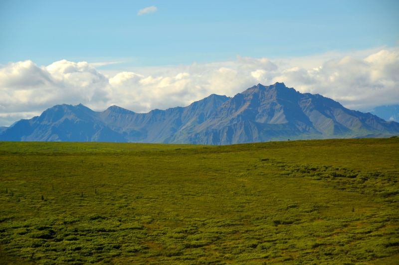 The study took place near Denali National Park, pictured here.
