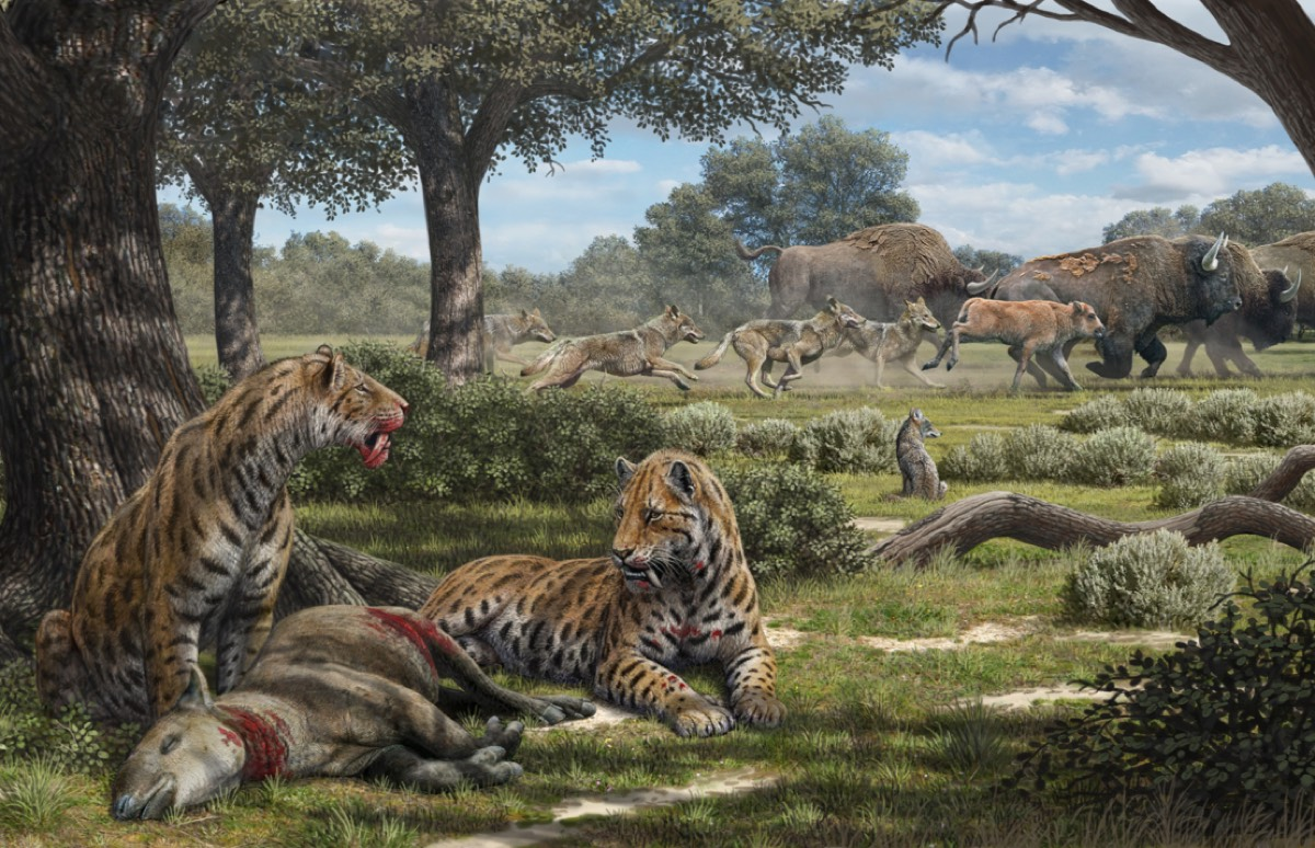 Illustration depicting our new understanding of the hunting behavior of La Brea carnivores, including saber-toothed cats, dire wolves, and coyotes.