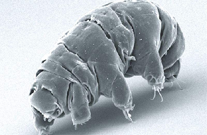 Tiny tardigrades crash-landed on the Moon and probably survived