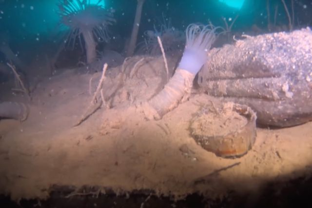 Fresh images of HMS Terror shipwreck could clear up lingering mysteries    Ars Technica