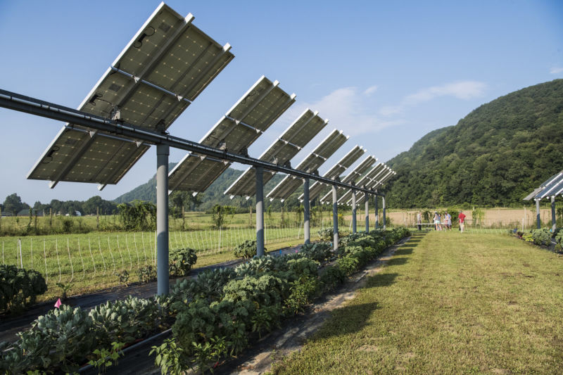 """Agrivoltaics"" studies like the one pictured here in Massachusetts are finding many crops that pair well with solar panels."