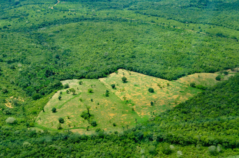 In The Amazon Deforestation Is Linked To Higher Malaria Rates