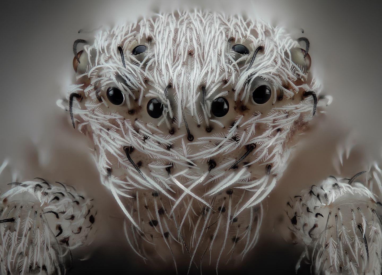 IMAGE(https://cdn.arstechnica.net/wp-content/uploads/2019/10/6-Javier-Ruperez-hairy-spider-1440x1035.jpg)
