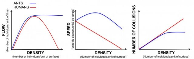Comparing traffic as a function of density, in ants and humans.
