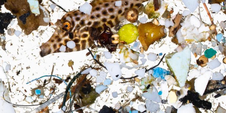 Major fish nurseries are awash in microplastics