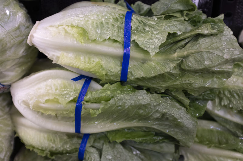 A close-up of freshly spritzed heads of romaine lettuce bound by blue ties.