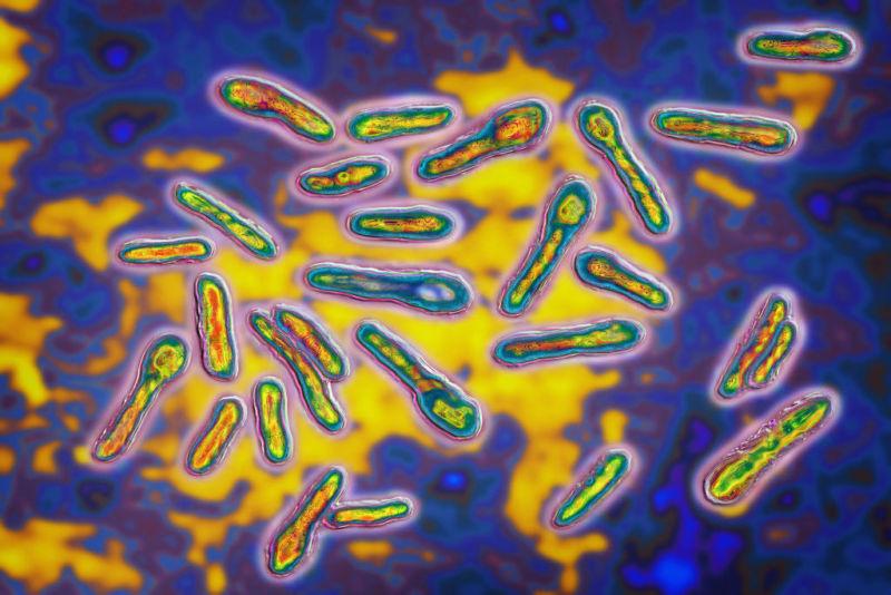 False color microscope image of bacteria.